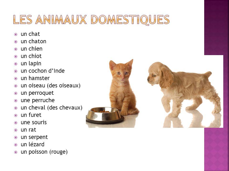 Top La Famille et les animaux domestiques - ppt télécharger XK29