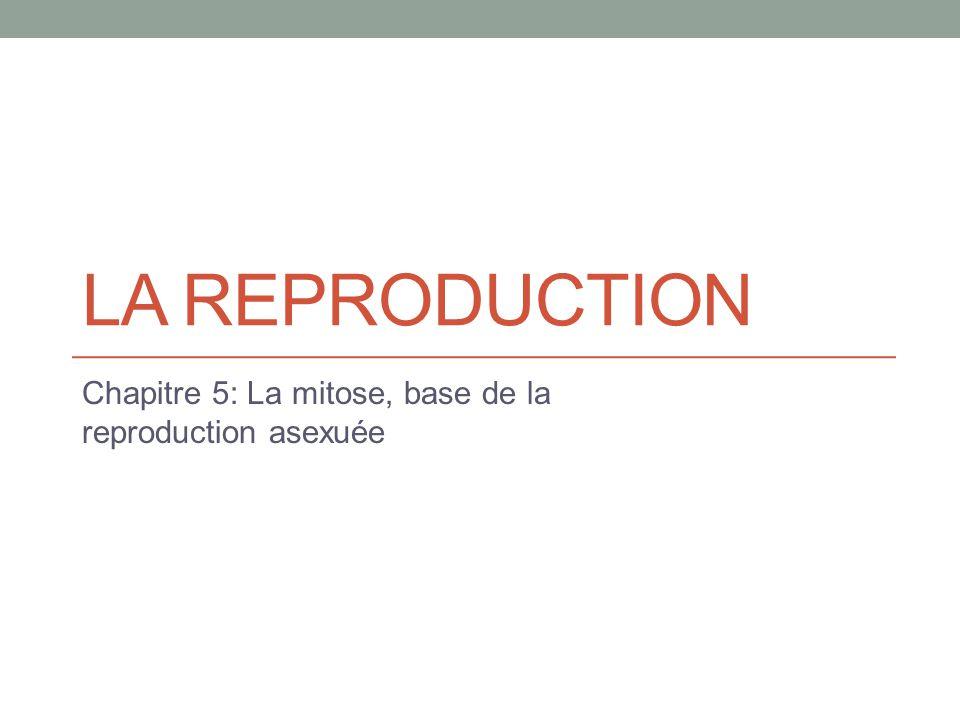 Chapitre 5: La mitose, base de la reproduction asexuée