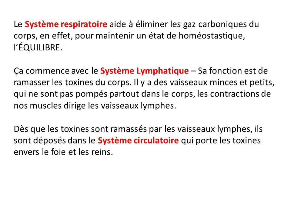 Le Système respiratoire aide à éliminer les gaz carboniques du corps, en effet, pour maintenir un état de homéostastique, l'ÉQUILIBRE.