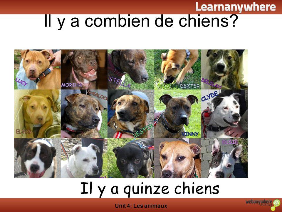 Il y a combien de chiens Il y a quinze chiens Unit 4: Les animaux