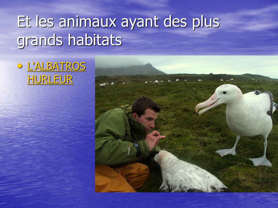 Et les animaux ayant des plus grands habitats