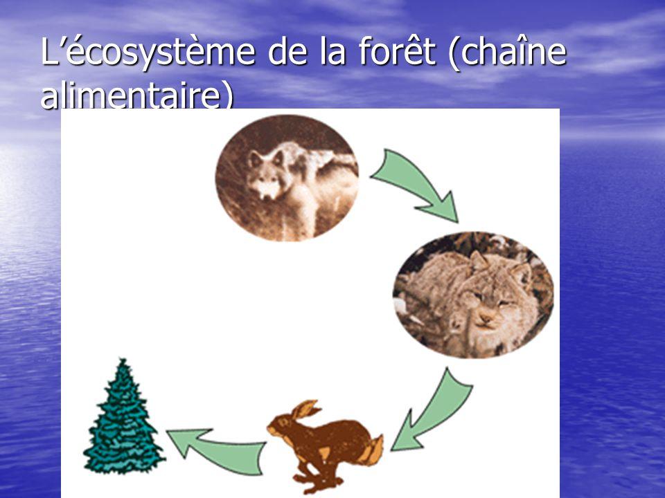 L'écosystème de la forêt (chaîne alimentaire)