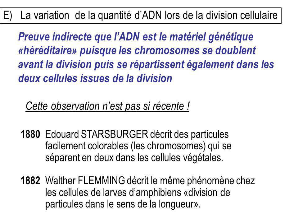 E) La variation de la quantité d'ADN lors de la division cellulaire