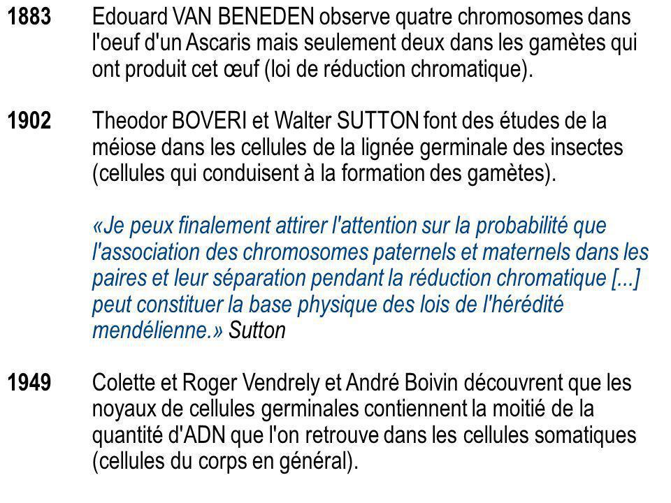 1883 Edouard VAN BENEDEN observe quatre chromosomes dans l oeuf d un Ascaris mais seulement deux dans les gamètes qui ont produit cet œuf (loi de réduction chromatique).