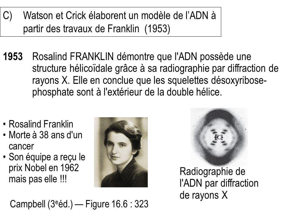 Radiographie de l ADN par diffraction de rayons X