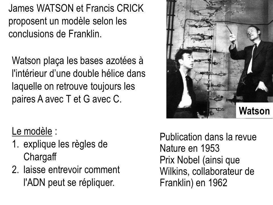 James WATSON et Francis CRICK proposent un modèle selon les conclusions de Franklin.