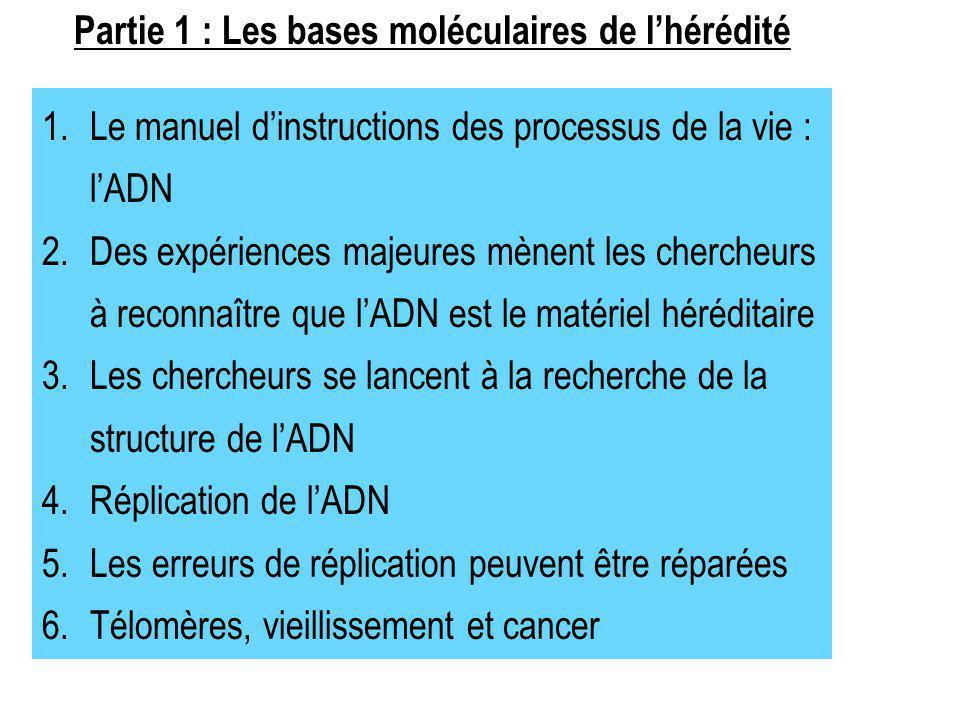 Partie 1 : Les bases moléculaires de l'hérédité