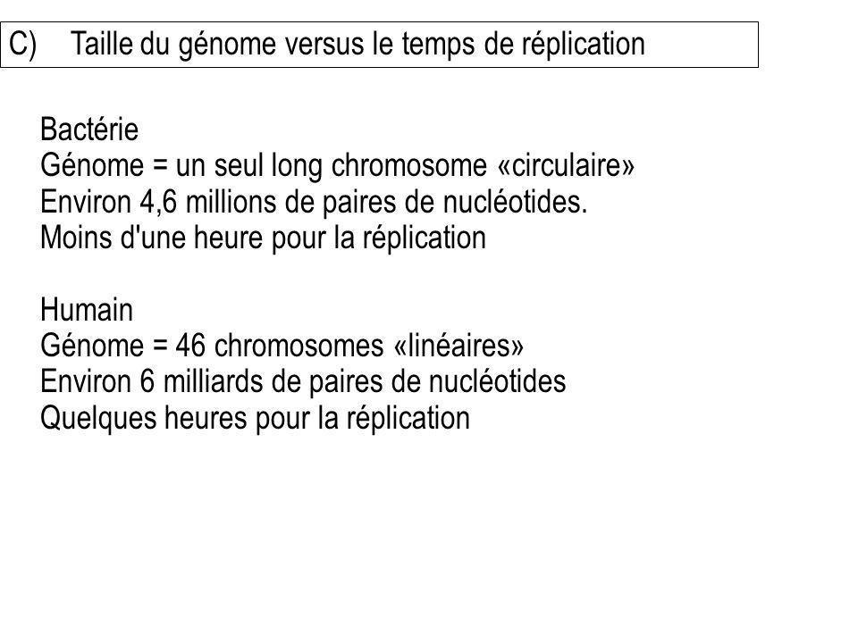 C) Taille du génome versus le temps de réplication