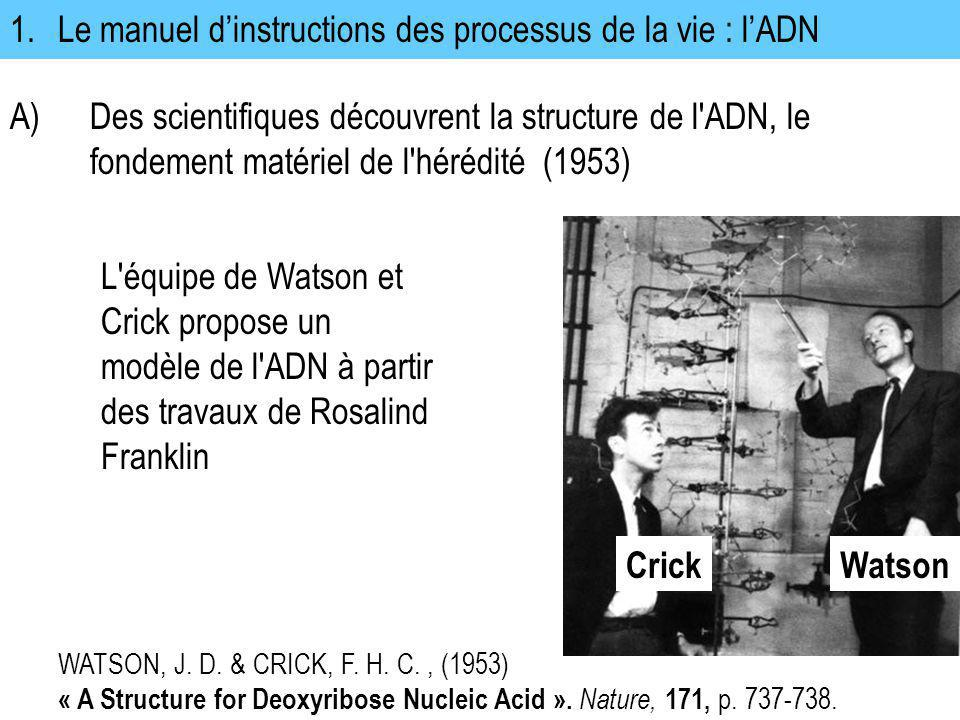 1. Le manuel d'instructions des processus de la vie : l'ADN