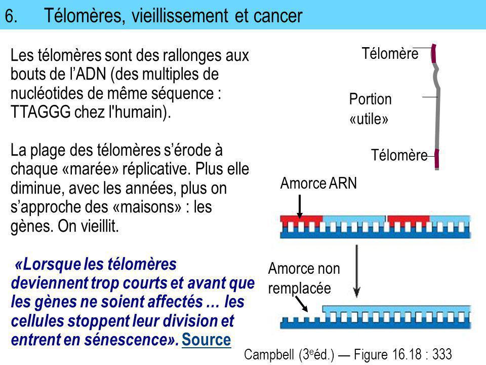 6. Télomères, vieillissement et cancer