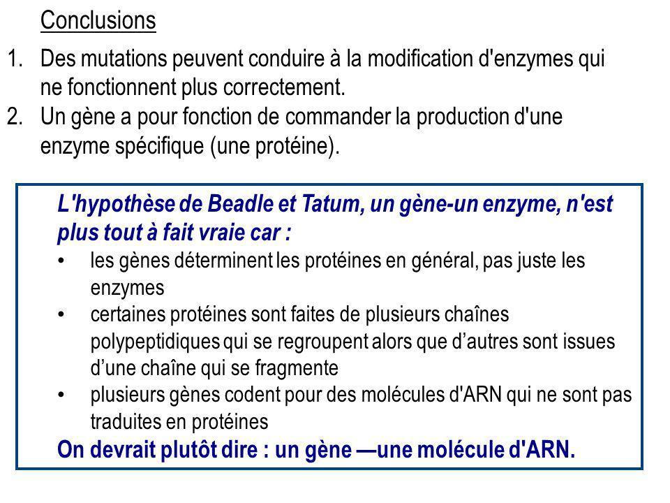 Conclusions Des mutations peuvent conduire à la modification d enzymes qui ne fonctionnent plus correctement.