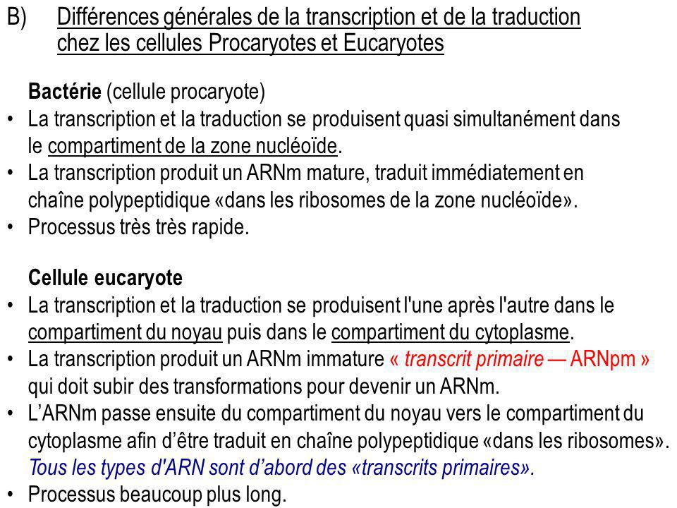 B) Différences générales de la transcription et de la traduction chez les cellules Procaryotes et Eucaryotes