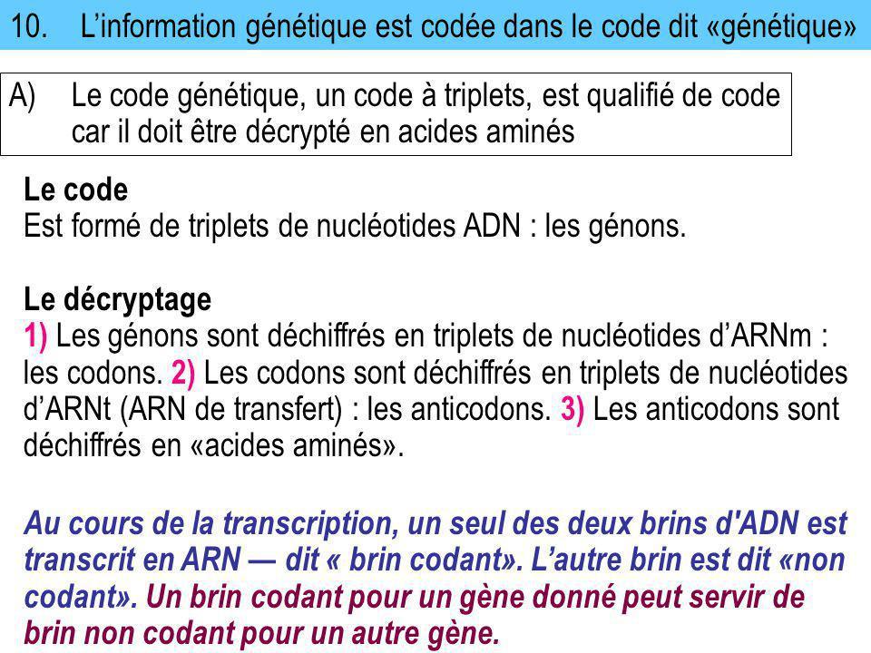 10. L'information génétique est codée dans le code dit «génétique»