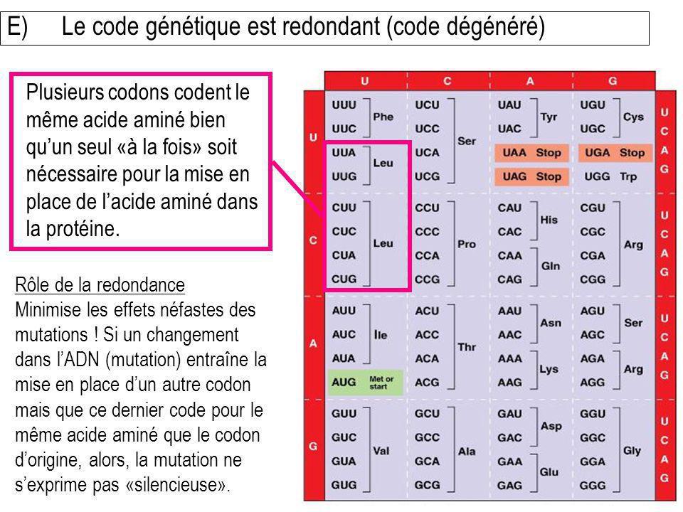 E) Le code génétique est redondant (code dégénéré)