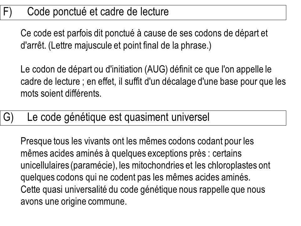 F) Code ponctué et cadre de lecture