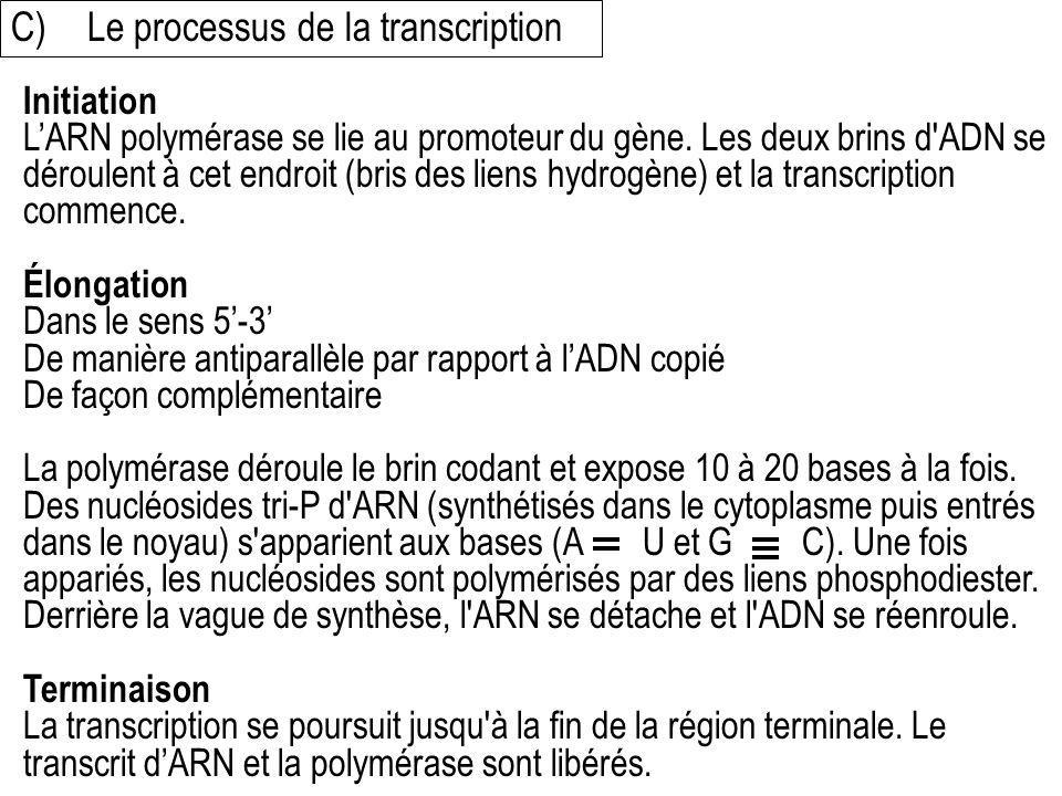 C) Le processus de la transcription