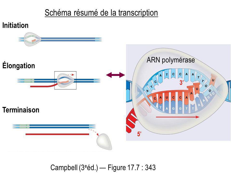 Schéma résumé de la transcription