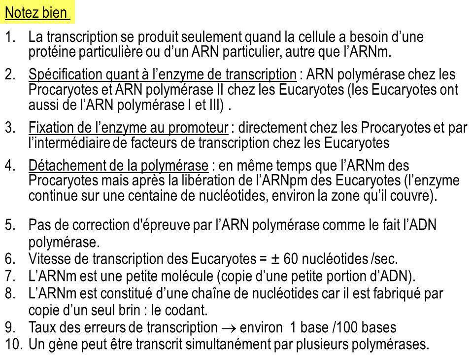 Notez bien La transcription se produit seulement quand la cellule a besoin d'une protéine particulière ou d'un ARN particulier, autre que l'ARNm.
