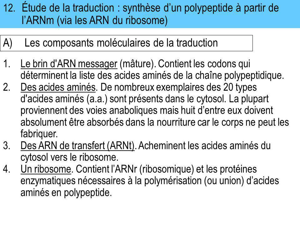 A) Les composants moléculaires de la traduction