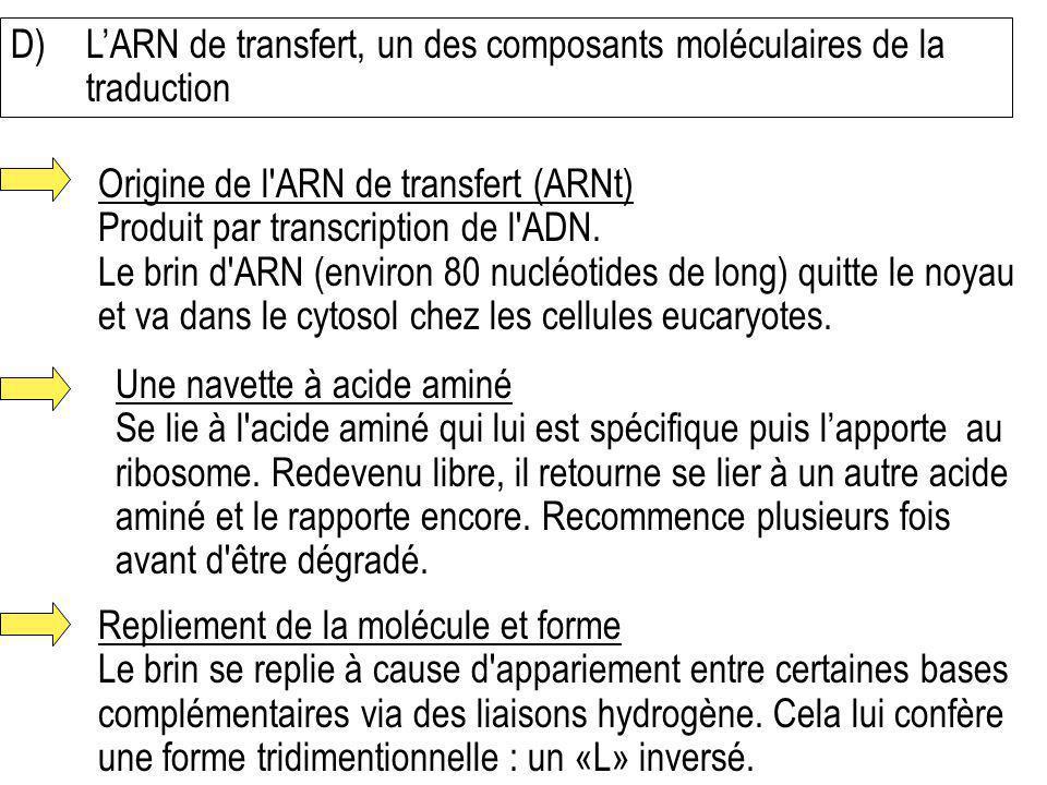 D) L'ARN de transfert, un des composants moléculaires de la traduction