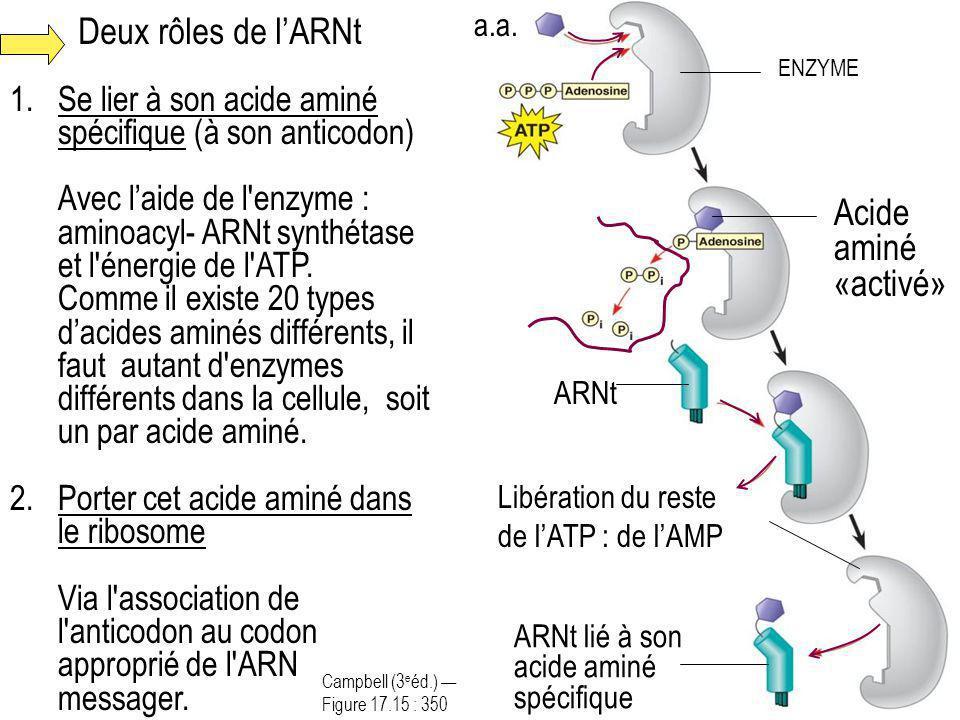 Deux rôles de l'ARNt Acide aminé «activé»