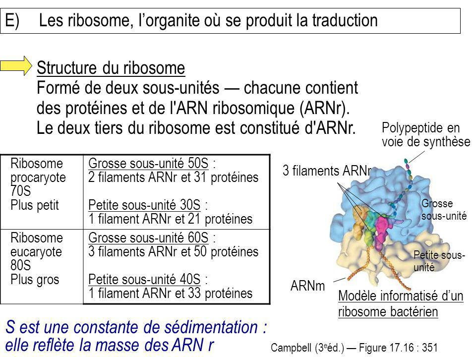 E) Les ribosome, l'organite où se produit la traduction