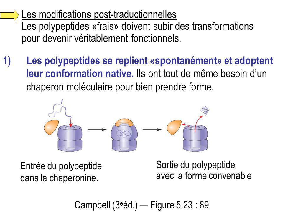 Les modifications post-traductionnelles Les polypeptides «frais» doivent subir des transformations pour devenir véritablement fonctionnels.