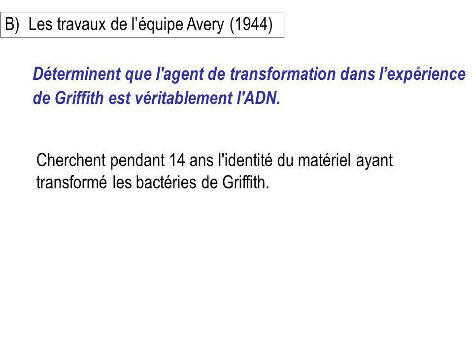 B) Les travaux de l'équipe Avery (1944)