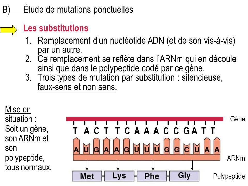 B) Étude de mutations ponctuelles