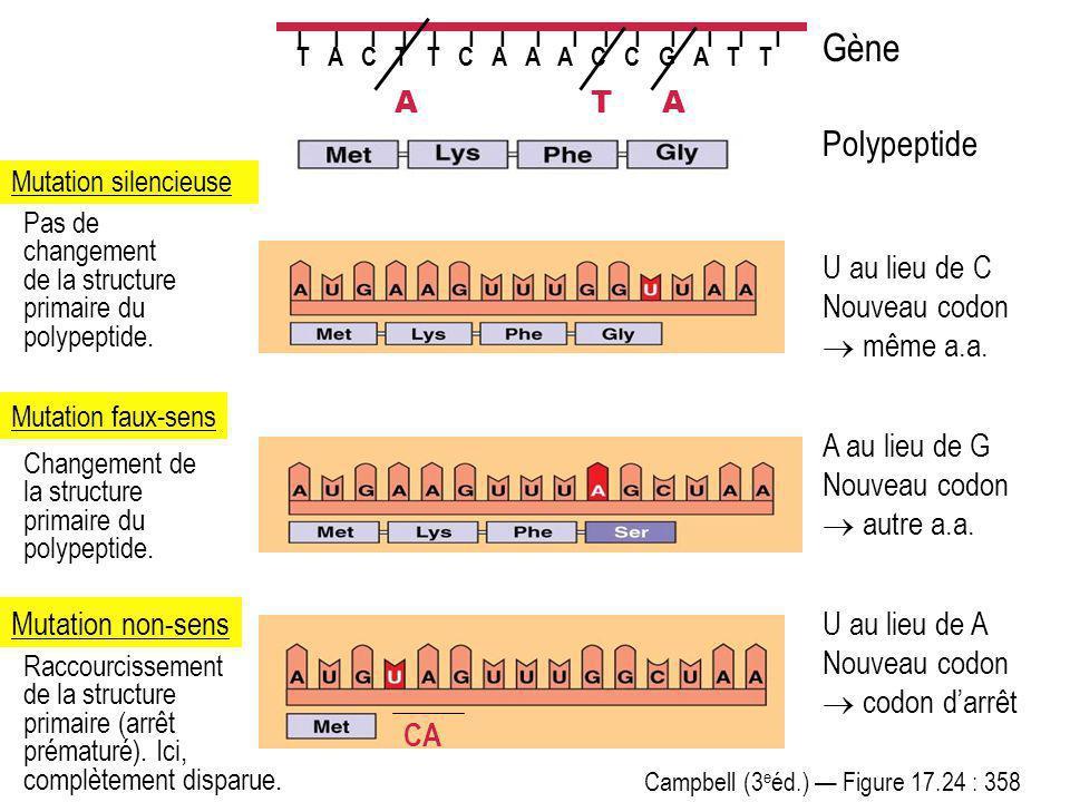 Gène Polypeptide U au lieu de A Nouveau codon  codon d'arrêt