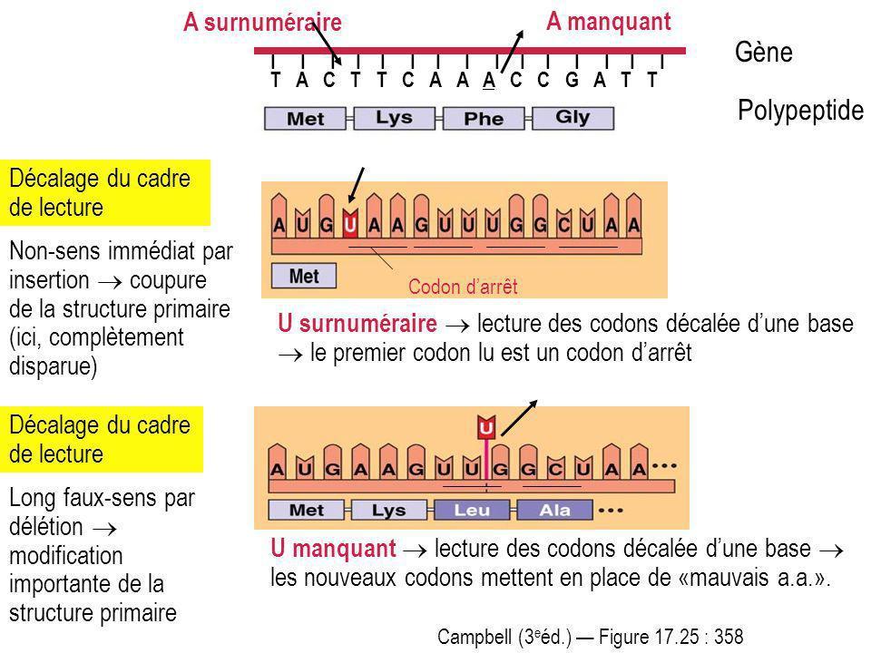 Gène Polypeptide A surnuméraire A manquant
