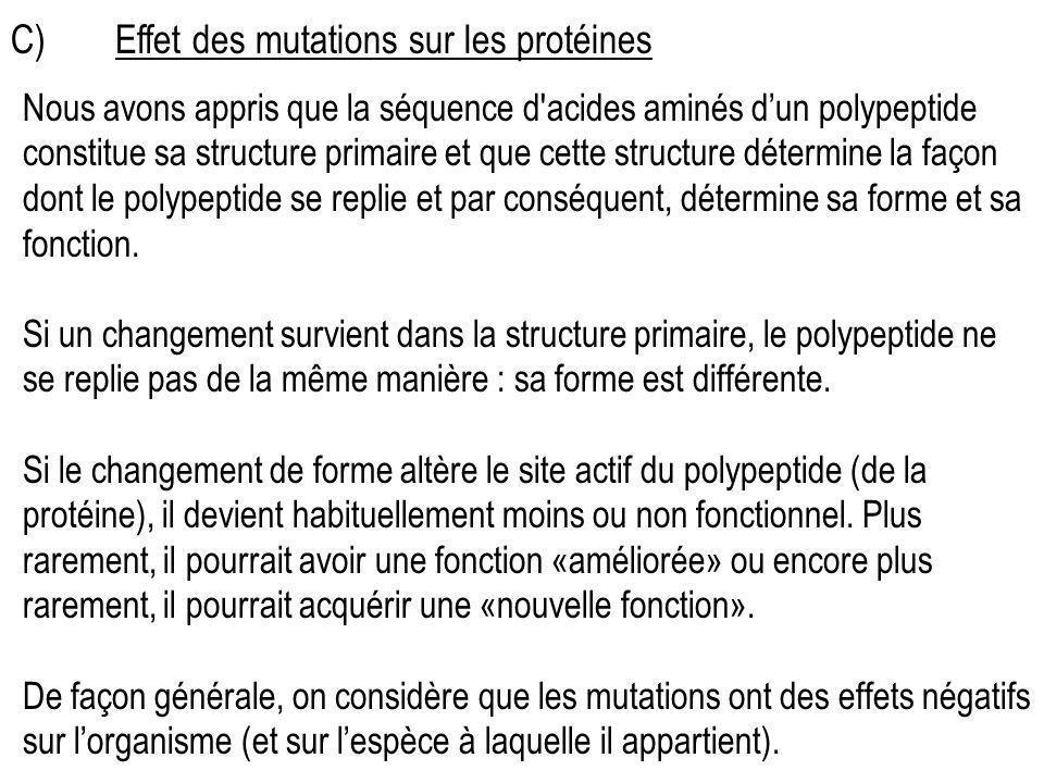 C) Effet des mutations sur les protéines