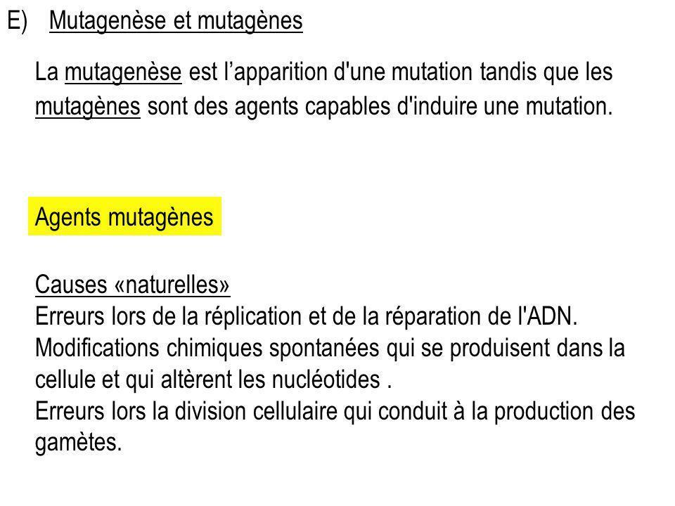 E) Mutagenèse et mutagènes