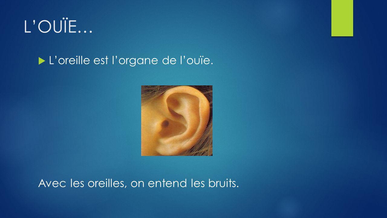 L'OUÏE… L'oreille est l'organe de l'ouïe.