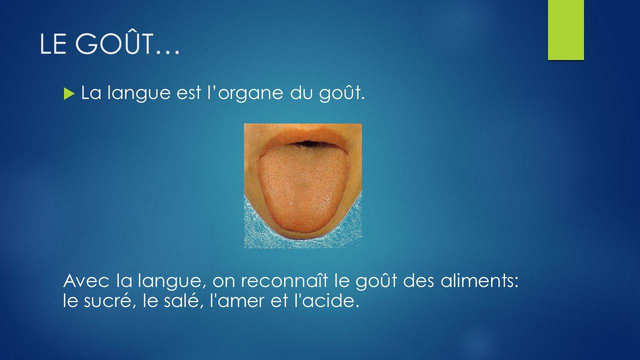 LE GOÛT… La langue est l'organe du goût.