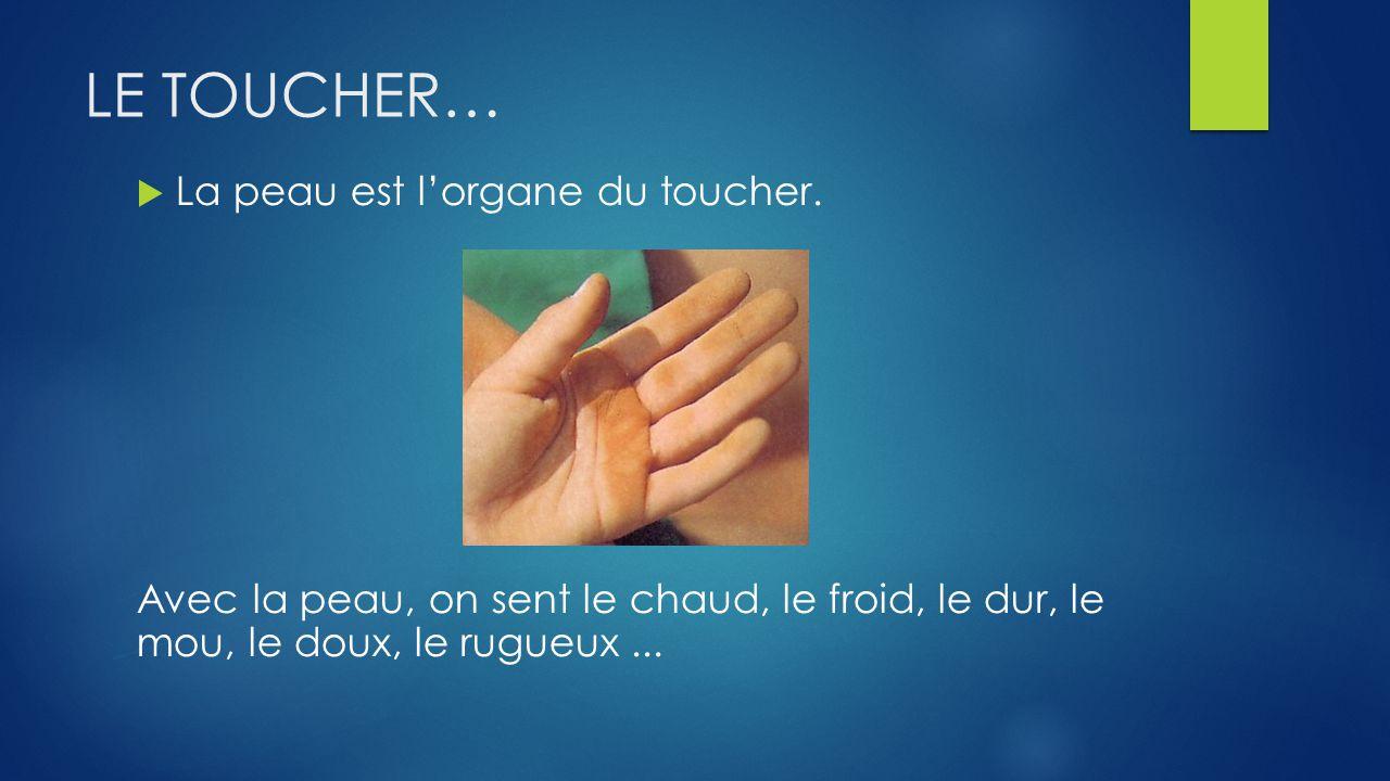 LE TOUCHER… La peau est l'organe du toucher.