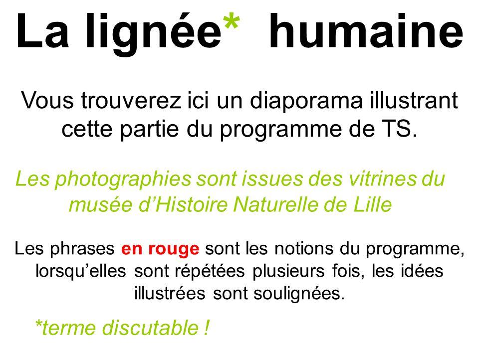 La lignée* humaine Vous trouverez ici un diaporama illustrant cette partie du programme de TS.