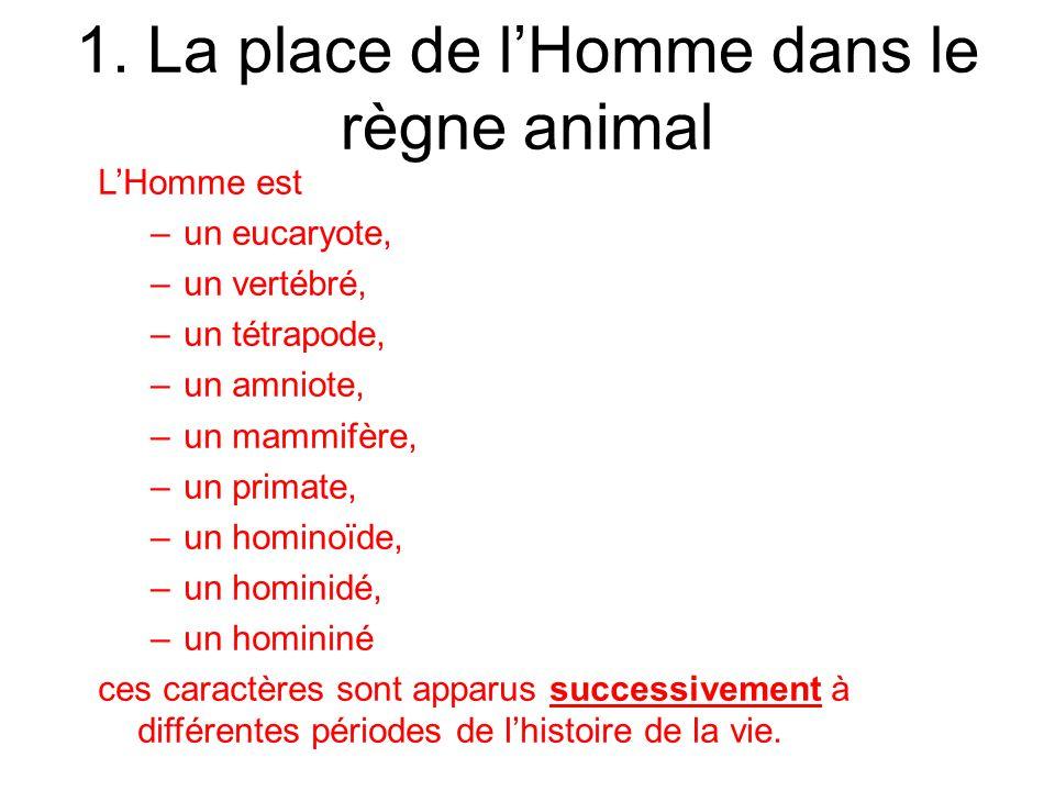 1. La place de l'Homme dans le règne animal