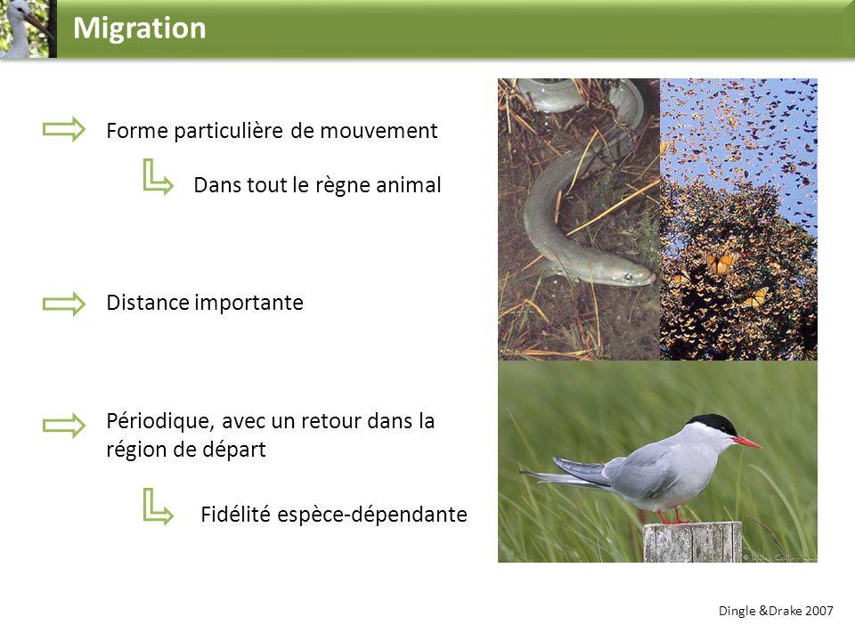 Migration Forme particulière de mouvement Dans tout le règne animal