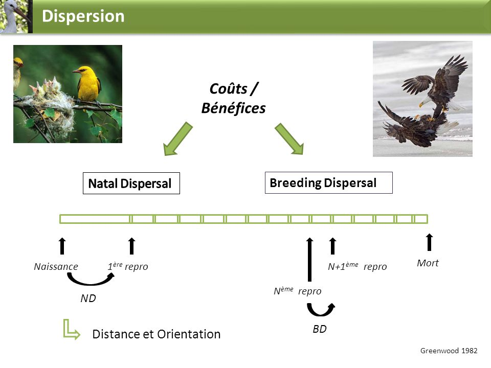 Dispersion Coûts / Bénéfices Natal Dispersal Breeding Dispersal