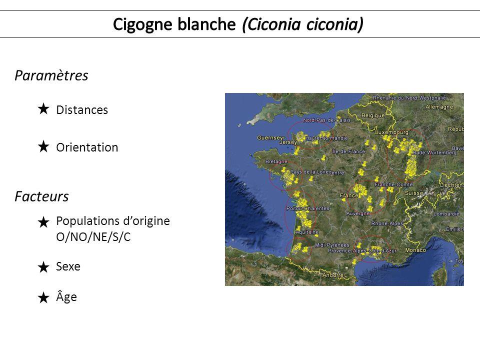 Cigogne blanche (Ciconia ciconia)