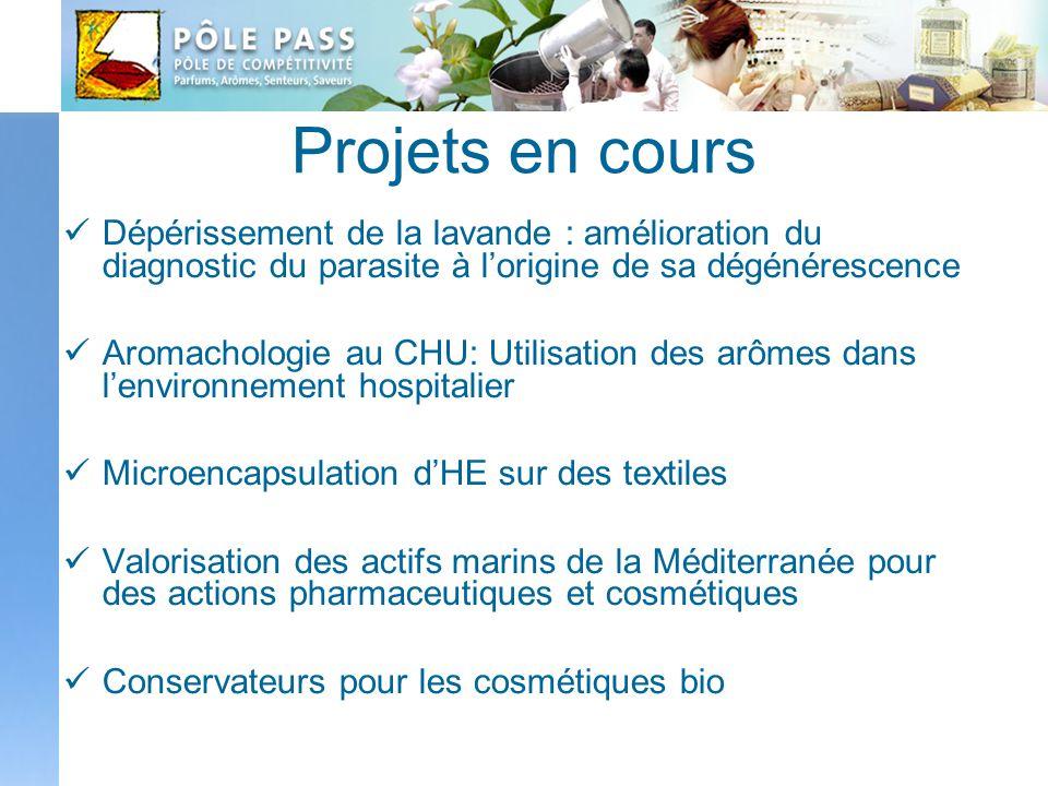 Projets en cours Dépérissement de la lavande : amélioration du diagnostic du parasite à l'origine de sa dégénérescence.