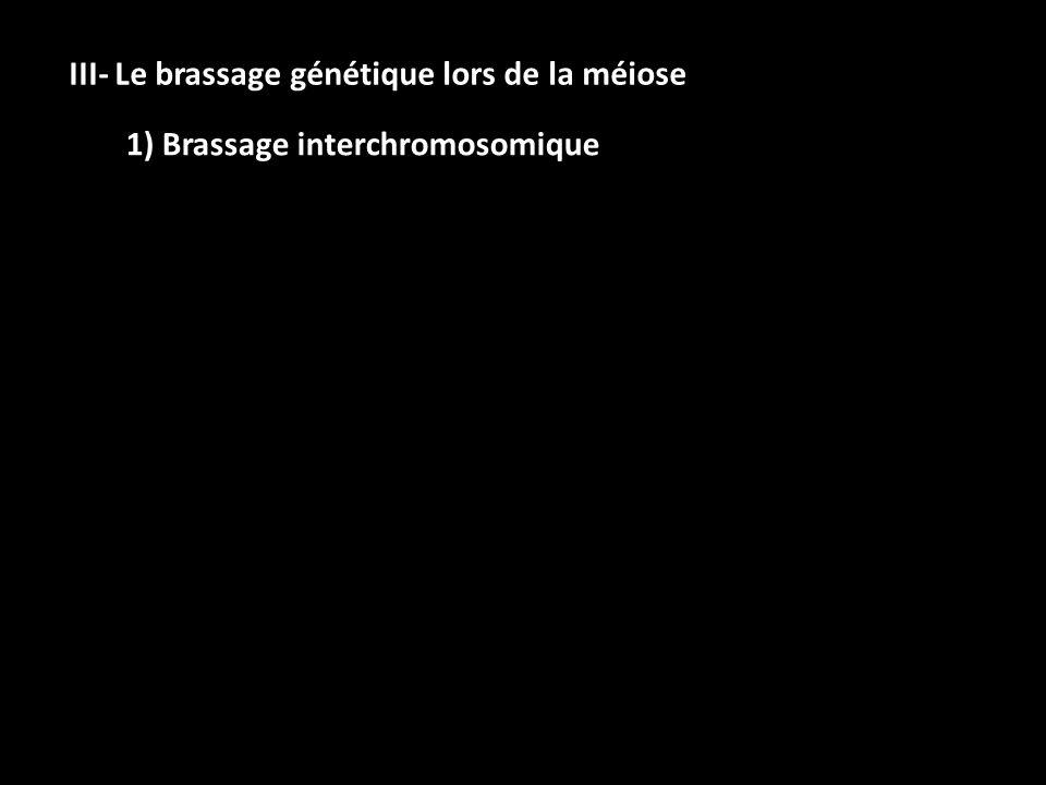 III- Le brassage génétique lors de la méiose