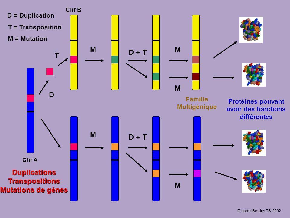 Duplications Transpositions Mutations de gènes