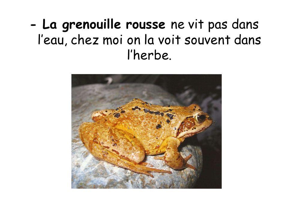- La grenouille rousse ne vit pas dans l'eau, chez moi on la voit souvent dans l'herbe.