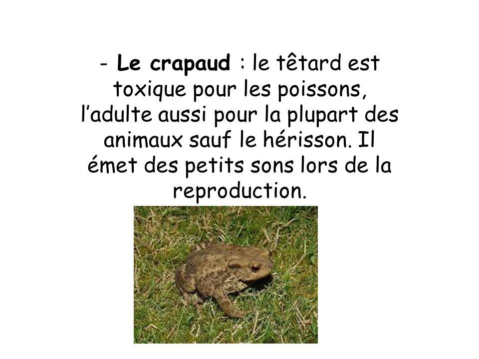 Le crapaud : le têtard est toxique pour les poissons, l'adulte aussi pour la plupart des animaux sauf le hérisson.