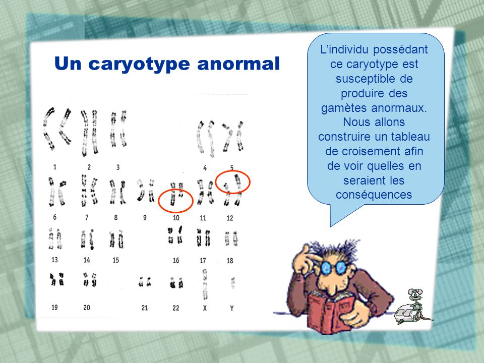 L'individu possédant ce caryotype est susceptible de produire des gamètes anormaux. Nous allons construire un tableau de croisement afin de voir quelles en seraient les conséquences