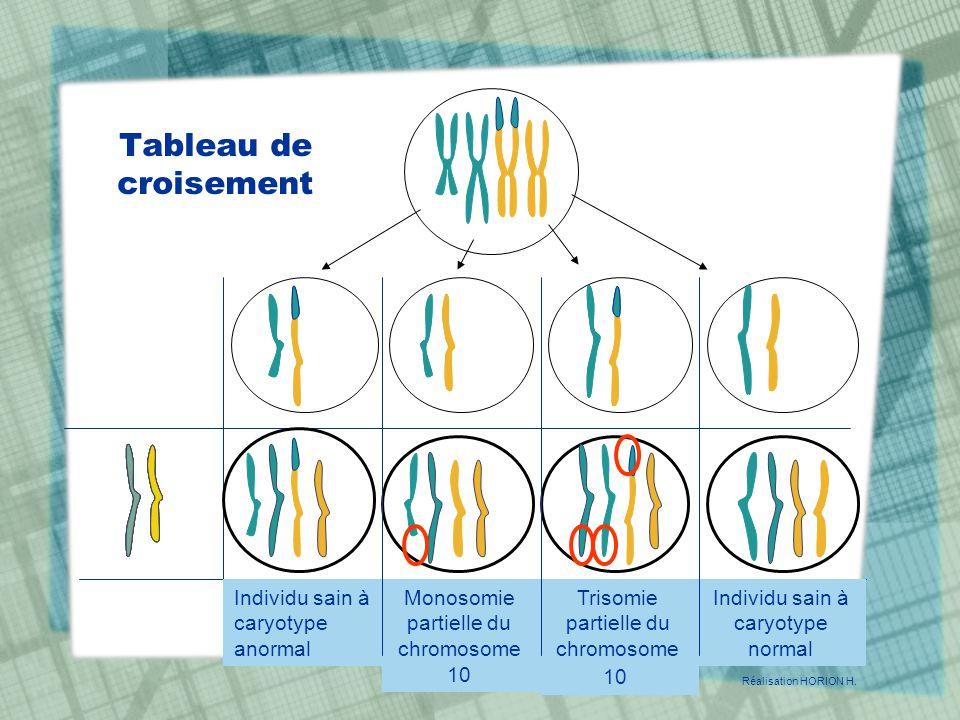 Tableau de croisement Individu sain à caryotype anormal