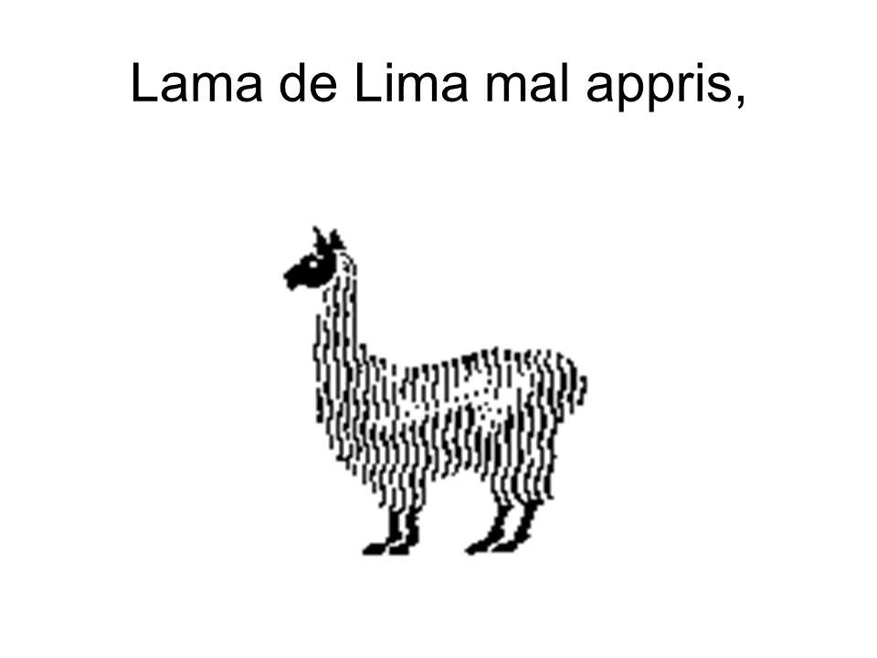Lama de Lima mal appris,