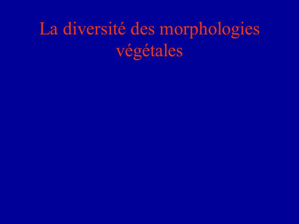 La diversité des morphologies végétales